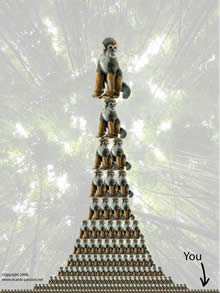 ape pyramid with master dominating slaves