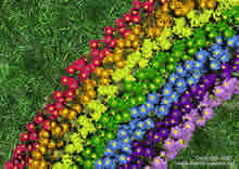flowers (bonnies) on a carpet with rainbow