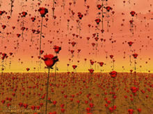 red roses raining on a field