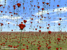 red roses falling from the sky on a field