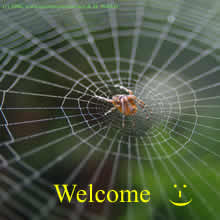 spider on its web waiting for its prey; welcome in English
