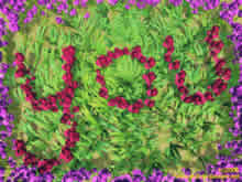 you in English written with red roses and grass