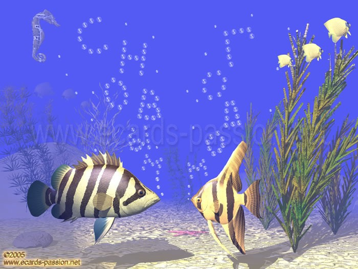 air bubbles; 2 fishes talking; seaweeds in aquarium; underwater scene; best wishes for the New Year