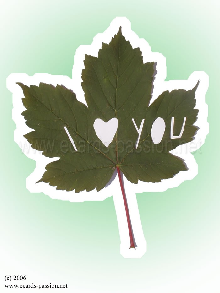 my heart belongs to you; maple leaf; declaration of love; romantic message