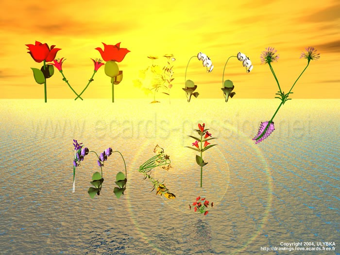 colorful romantic flowers; marriage proposal; sunset on ocean