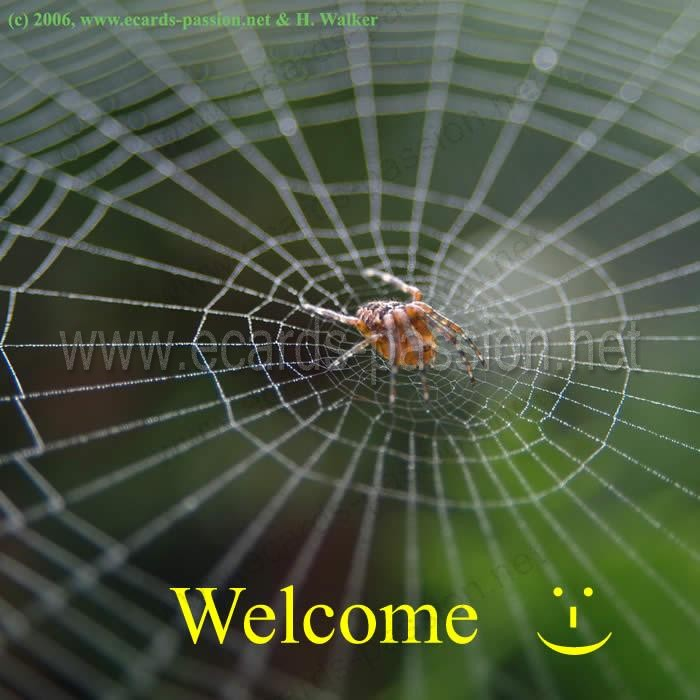 don't be afraid; I won't eat you; friendly invitation to a party; careful, there is a trap; hungry spider on its web;  welcome