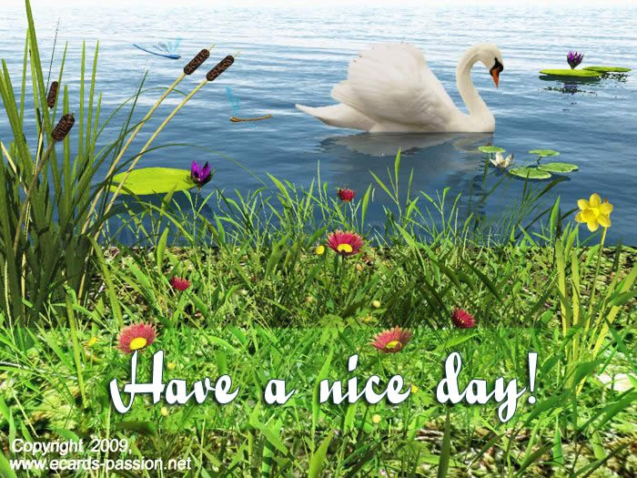 swan lake; Have a nice day; pleasant place; reeds and flowers