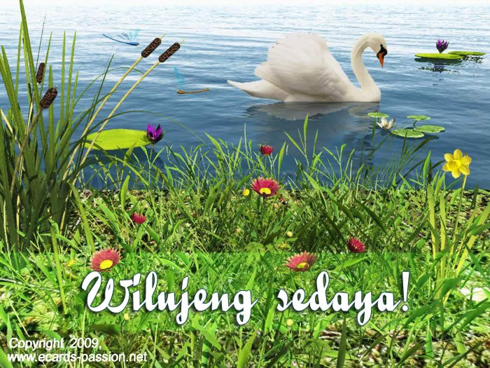 lake, flowers, have a nice day, pleasant, reeds, swan